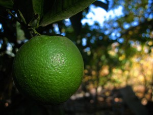 Green_orange_(12243066326)